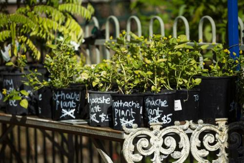 Buy a plant from the Eco Shop at the Eco House & Garden